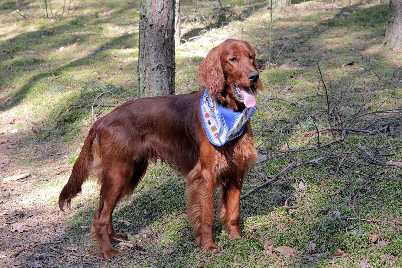 dog-367984_1920